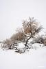 SnowandtreeWhiteSands_0167