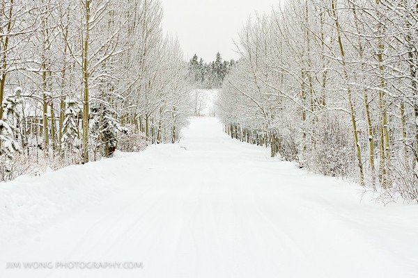 Snowy path, Yukon Animal Preserve