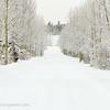 Snowy path, Yukon Animal Preserve