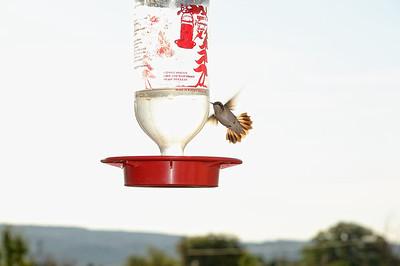 On passe prendre un café à l'outfitter café, il y a des mangeoires à colibris, on en voit un, pourtant normalement ils sont en partance pour le Mexique