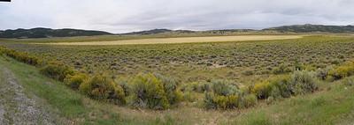 Stitched Panorama, un champs de fleurs jaunes....