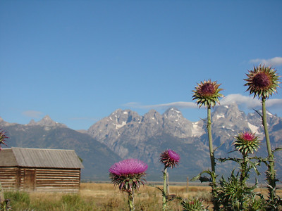2011 29 août Grand Teton