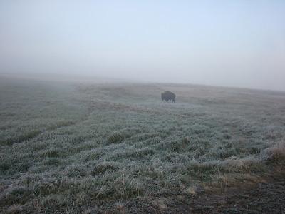 C'est la portion du parc fermée aux randonneurs, suite au décès d'un des nôtres après une attaque de grizzli