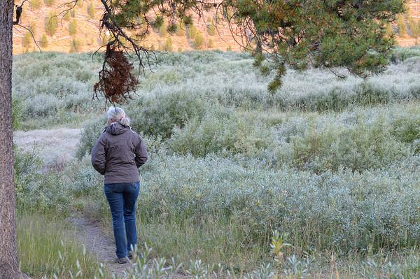 on essaye d'aller dans les meadows, il fait trés froid