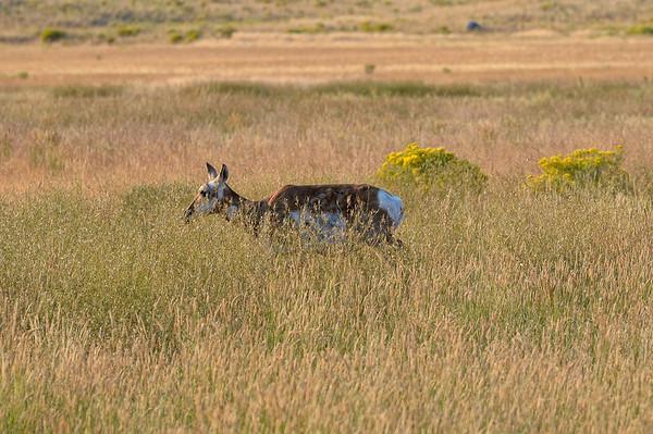 juste à l'entrée du parc, quelques antilopes