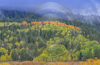 Afton Wyoming Autumn Fall Color Colorful Tree Leaf Fine Art Photography For Sale - 015258 - 28-09-2014 - 10945x7149 Pixel