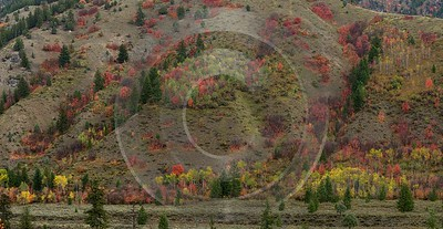 Alpine Wyoming River Tree Autumn Color Colorful Fall Fine Art Photography Park Spring - 015535 - 22-09-2014 - 13185x6812 Pixel