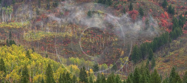 Alpine Wyoming River Tree Autumn Color Colorful Fall Flower Fine Art Printing Order Barn - 015537 - 22-09-2014 - 9926x4399 Pixel