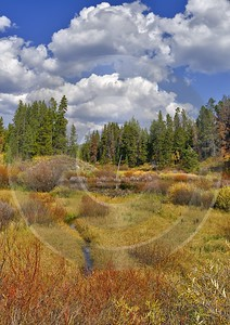 Jackson Hole Grand Teton National Park Wyoming Christian City Creek Forest Animal Fine Art Photos - 011598 - 27-09-2012 - 7155x10111 Pixel