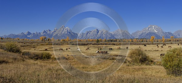 Elk Ranch Flats Grand Teton National Park Wyoming City Forest Western Art Prints For Sale - 015385 - 25-09-2014 - 14462x6617 Pixel