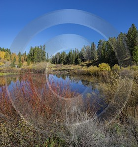 Willow Flats Mount Moran Grand Teton National Park Flower Barn Prints Pass - 015347 - 25-09-2014 - 7262x7769 Pixel