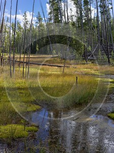 Norris Geyser Basin Swamp Yellowstone National Park Wyoming Fine Arts Forest - 015272 - 26-09-2014 - 7046x9455 Pixel