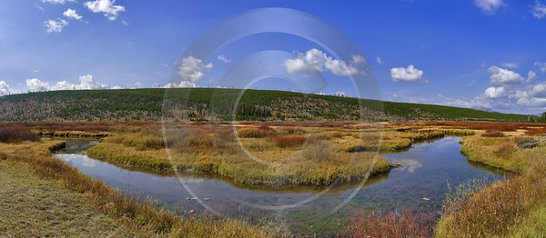 Yellowstone National Park Wyoming Grand Loop Road Willow Fine Art Photography Prints For Sale - 011710 - 28-09-2012 - 16382x7143 Pixel