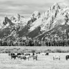 Grand Teton Mountain Range, Grand Teton National Park, Wyoming