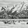 Grand Teton Mountain Range, Grand Teton National Park, Wyoming