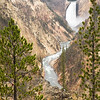 View of Yellowstone Falls, Upper falls, at Yellowstone National Park, Wyoming, USA