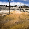 Spring Terrace at Mammoth Hot Springs, Yellowstone National Park, Wyoming USA