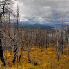 Trees Burned by Forestfire in Yellowstone National Park, Wyoming, USA