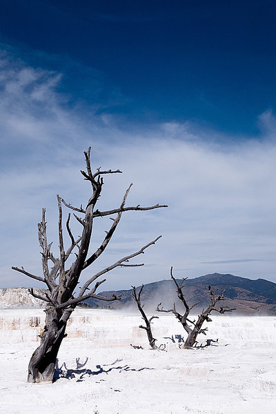 Upper Terrance, Mammoth Hot Springs, Yellowstone National Park, Wyoming, USA