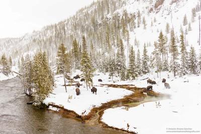 Estampas de Yellowstone / Yellowstone prints