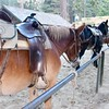 Our saviors: The mules of Yosemite Stables