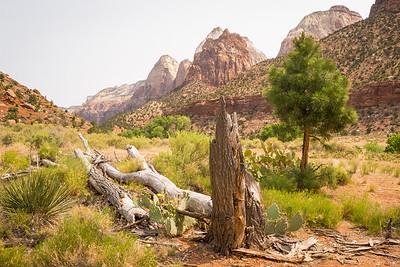 Zion-Bryce-Grand Canyon N. Rim