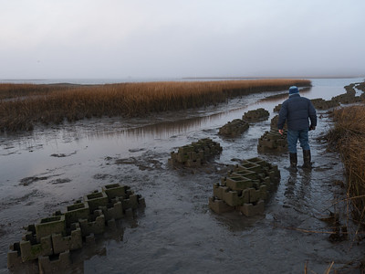Recently deployed structure for oyster reef restoration in New Jersey