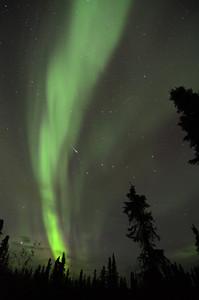 Northern Lights (aurora borealis) with a shooting star.  Outside Fairbanks, Alaska.