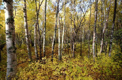 Woods outside Anchorage, Alaska