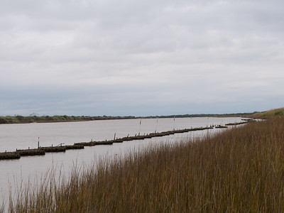 Oysters used for shoreline stabilisation