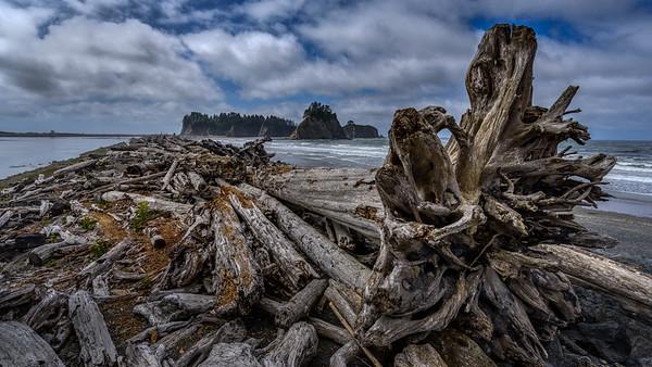 Driftwood, Rialto Beach, WA