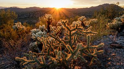 Organ Pipe NM, Arizona