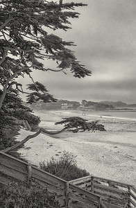 Carmel Cypress.