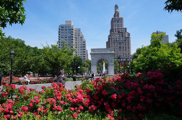 Washington Park Square in bloom!