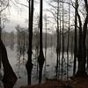 Cypress millpond, Cheraw State Park, SC