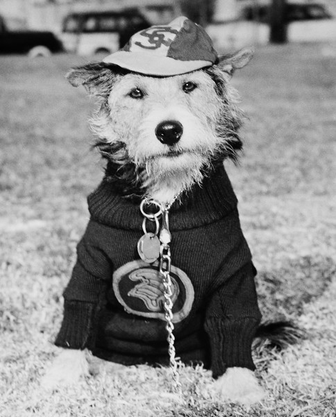 University of Southern California mascot, George Tirebiter II, 1950