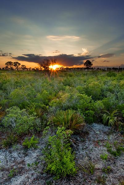 Sunset over xeric oak scrub at Flamingo Villas