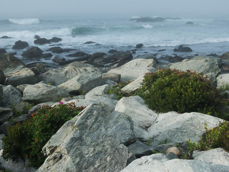 Wildflowers on the Rhode Island Coast