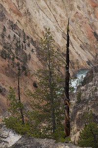 Grand Canyon of the Yellowstone - P8