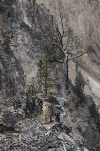 Grand Canyon of the Yellowstone - P7