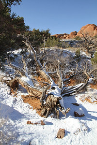 Arches NP-5297