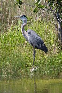 Everglades-8734