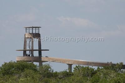 Everglades-8749