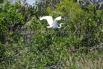 Everglades-8888