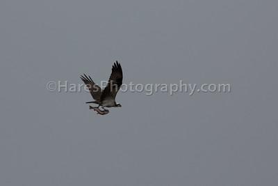 Grand Teton NP- 2015-1344