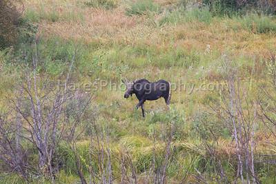 Grand Teton NP- 2015-1257