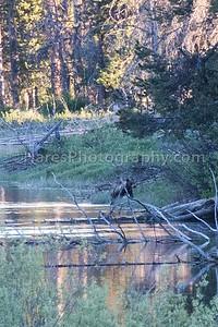Grand Teton-5885