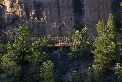 Yoda - Mesa Verde-215
