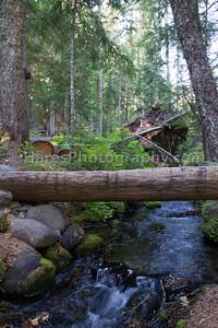 Mount Rainier-4611