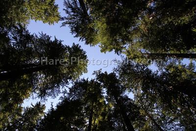 Mount Rainier-4888